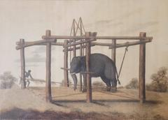 Hindoo Method of Taming Elephants