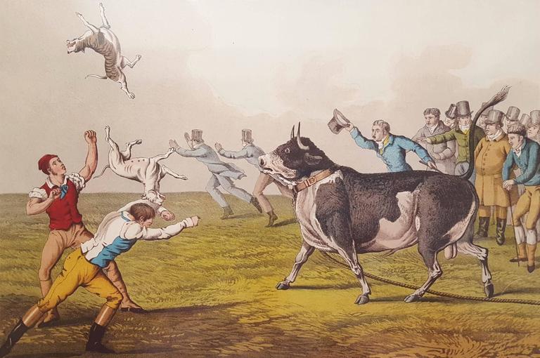 Henry Alken Bull Baiting Print For Sale At 1stdibs