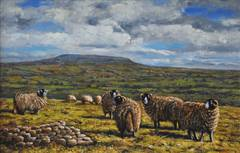 Geoffrey Smith - Towards Penhill with Swaledale Sheep