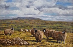 Towards Penhill with Swaledale Sheep