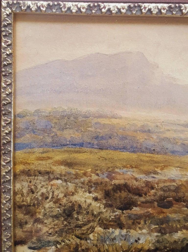 Extensive Moorland Landscape 7