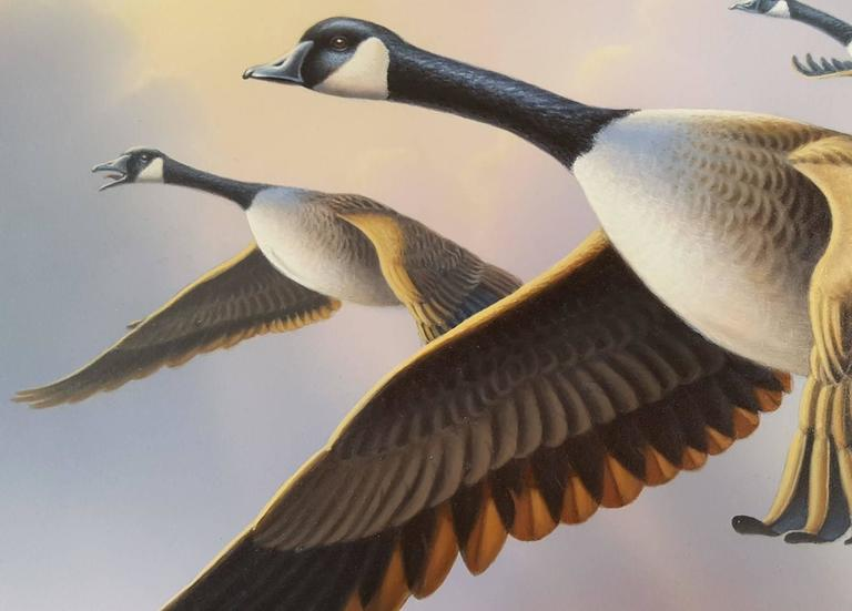Canada Geese For Sale 3