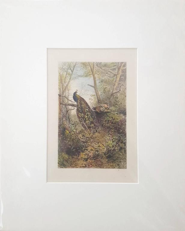 Peacocks on a Bough - Print by Karl Bodmer