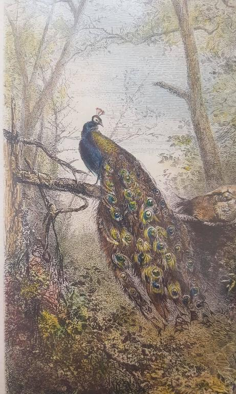 Peacocks on a Bough - Gray Animal Print by Karl Bodmer
