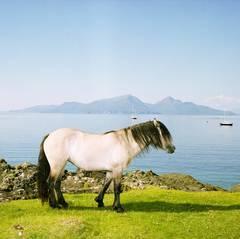 Horse, Isle of Muck
