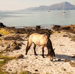 Horse, Beach, Isle of Much