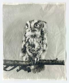 Owl XIII