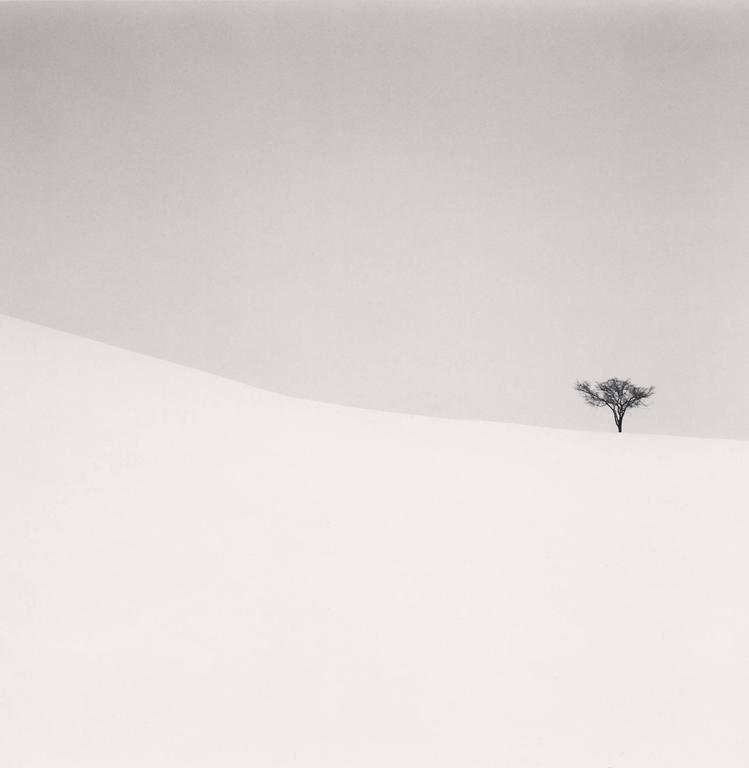 Michael Kenna Black and White Photograph - Single Tree, Mita, Hokkaido, Japan. 2007