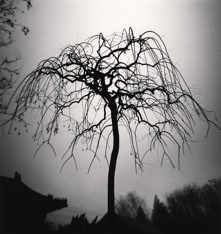 Forbidden City Tree, Beijing, China. 2007