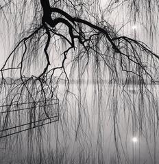 Lake Tree, Beihai Park, Beijing, China. 2008