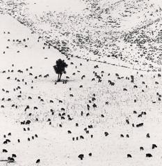 Two Hundred and Seven Sheep, Rakaia Valley, Canterbury, New Zealand. 2013