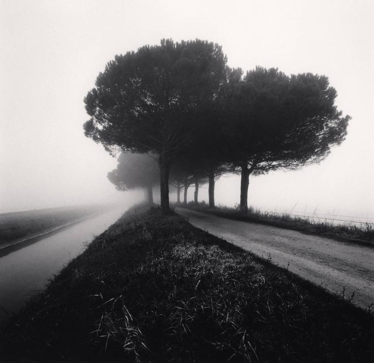Canal and Trees, Goro Ferrara, Veneto, Italy