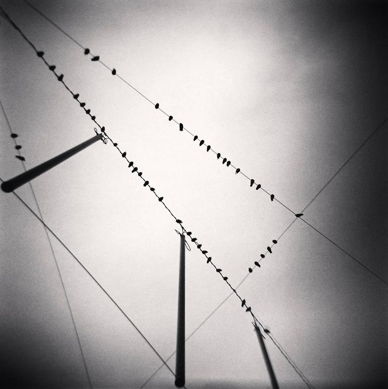 Michael Kenna Landscape Photograph - Fifty Two Birds, Zurich, Switzerland