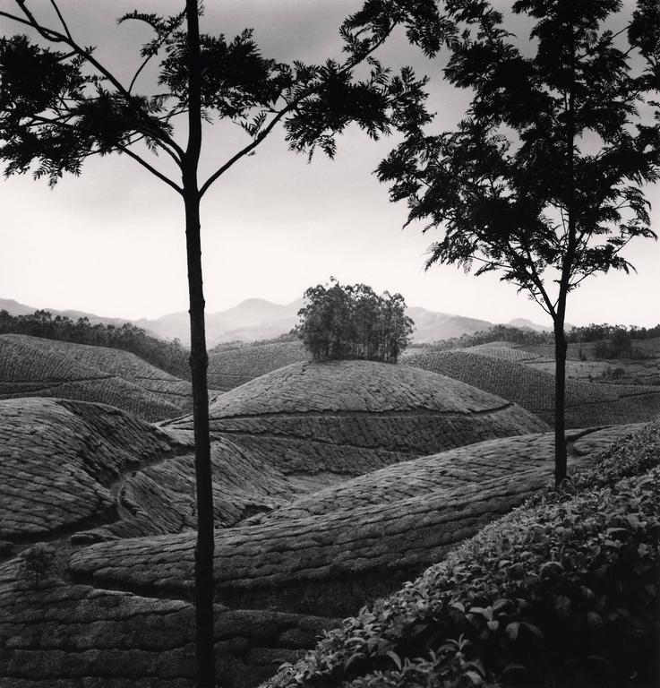 Tea Estates, Study 1, Munnar, India