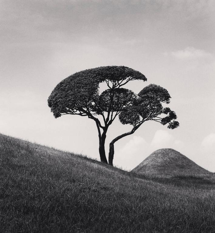 Michael Kenna Black and White Photograph - Tree and Mountain, Suizenji Joju-en Garden, Dumamoto, Kyushi, Japan