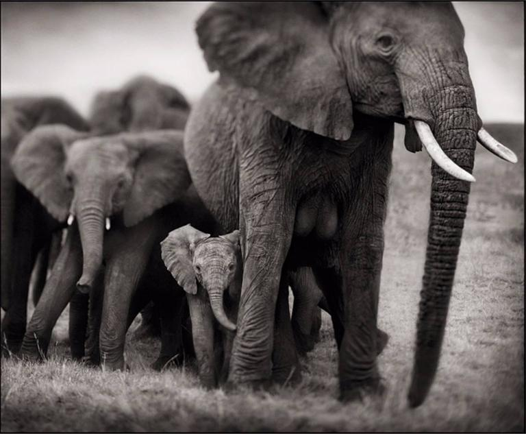 Elephant Mother and Two Babies, Serengeti