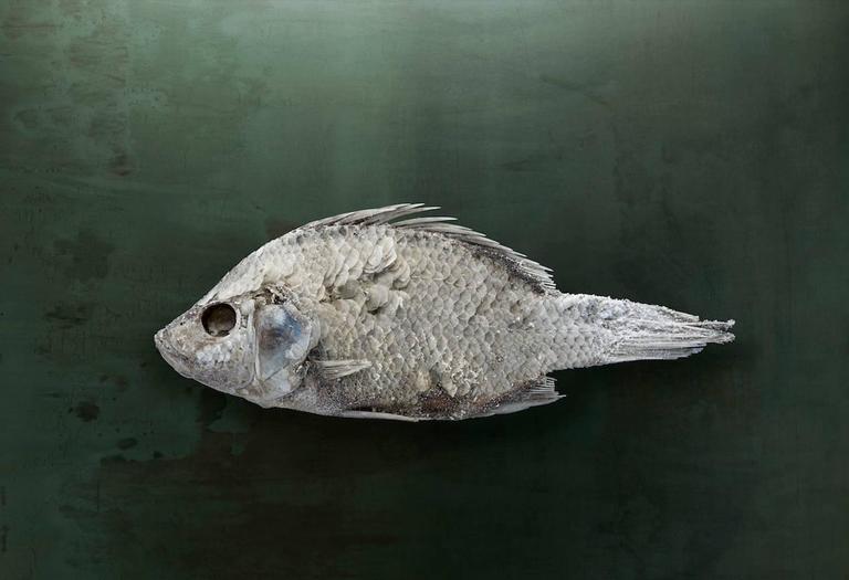 Brad wilson salton sea fish 1 santa fe nm 2010 for Salton sea fishing
