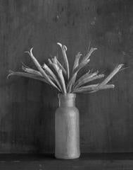 James Pitts -  Bottle With Sharon's Seeds