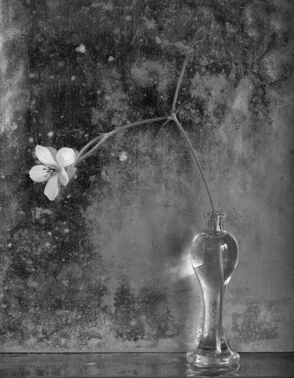 James Pitts – Clover Flower