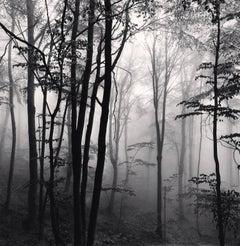 Forest Mist, Study 2, Rigopiano, Abruzzo, Italy