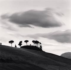 Pine Trees at Dusk, Loreto Aprutino, Abruzzo, Italy