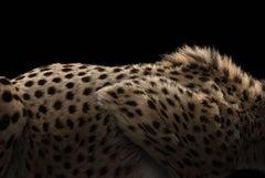 Cheetah #5, Los Angeles, CA, 2016
