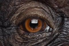 Chimpanzee #17, Los Angeles, CA, 2016
