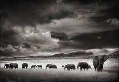 Elephant Herd, Serengeti