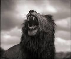 Lion Roar, Maasai Mara