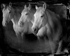 Tres Blancos