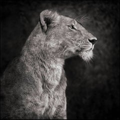 Portrait of Lioness Against Rock, Serengeti 2007