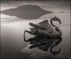 Petrified Reflected Flamingo, Lake Natron 2010