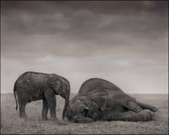 Elephants (The Two), Amboseli 2012