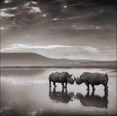 Rhinos in Lake, Nakuru 2007