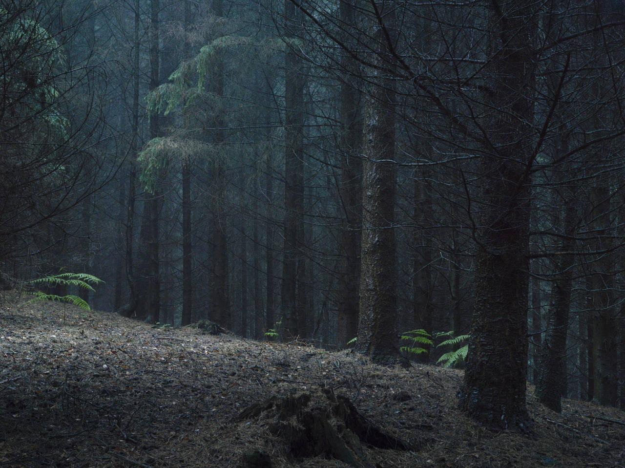 слезы льются картинки леса как в сумерках позволит