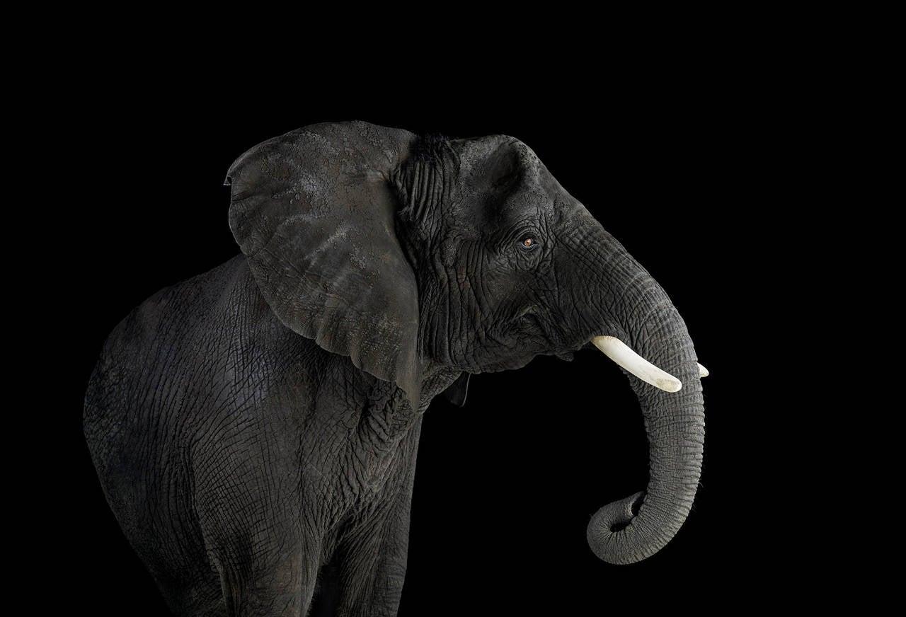 Elephant no. 3