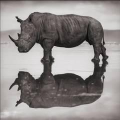 Rhino on Lake, Nakuru