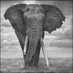 Elephant Sails