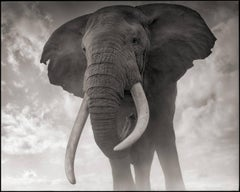 Elephant Against Sky, Amboseli