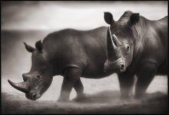 Two Rhinos, Lewa Downs