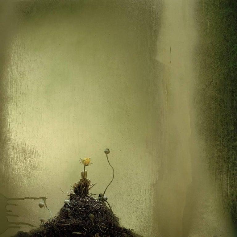 Carlos Tarrats Still-Life Photograph - Untitled 18