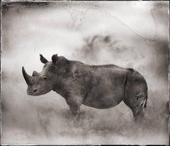 Rhino In Dust, Lewa Downs