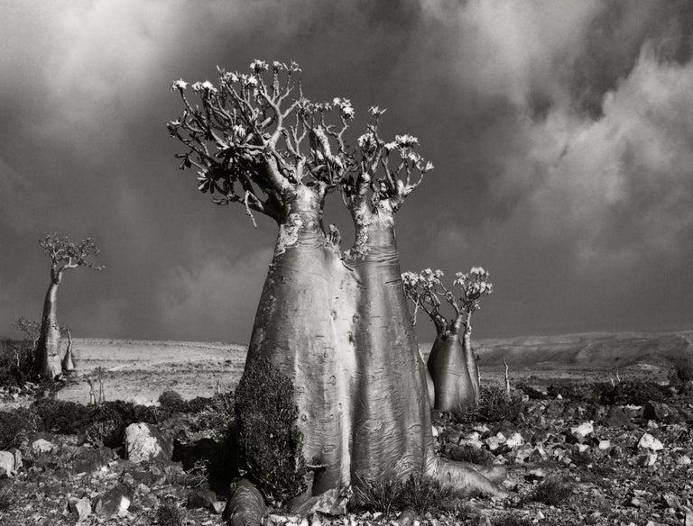Beth Moon Black and White Photograph - Desert Rose (Wadi fa Lang)