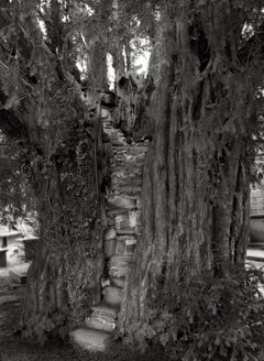 Nantglyn Pulpit Yew