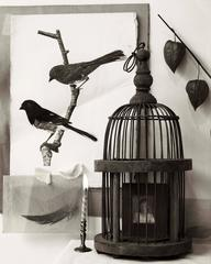 Two Birds, Cage