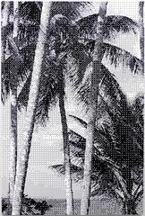 Untitled, St.Lucia II
