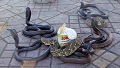 C-print of Helotroph Cobra con Crauti