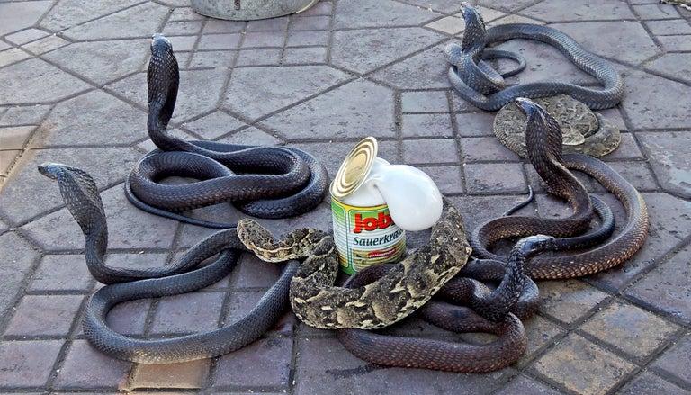 Venske & Spanle Color Photograph - C-print of Helotroph Cobra con Crauti