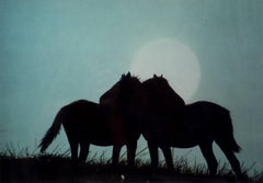 Horses Against Moonlight