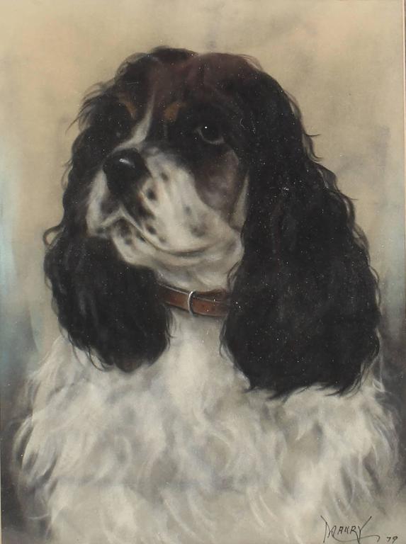 Portrait of a Springer Spaniel